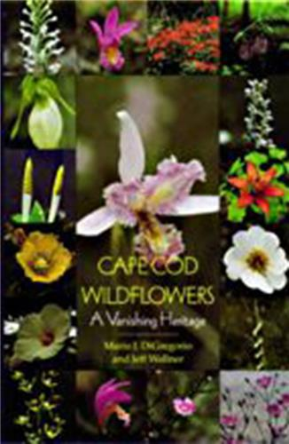 Book cover for Cape Cod Wildflowers